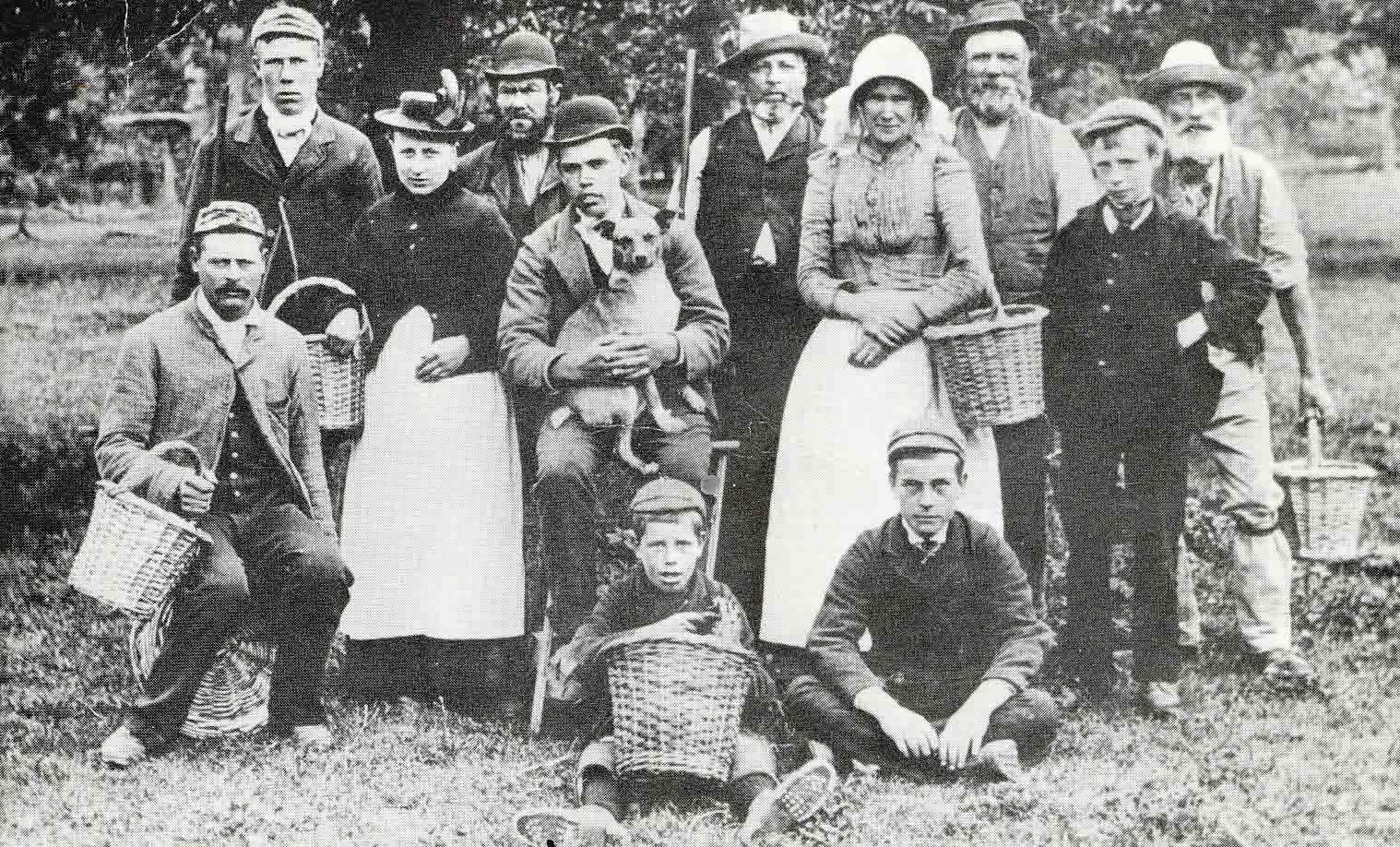 Cherry Pickers 1900