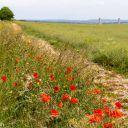 Walk: Didcot Upton Harwell